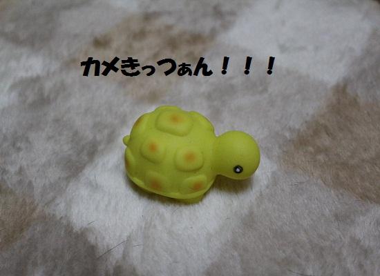 カメきっつぁん!!!
