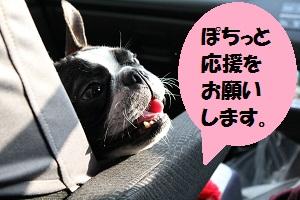 応援たま車の助手席