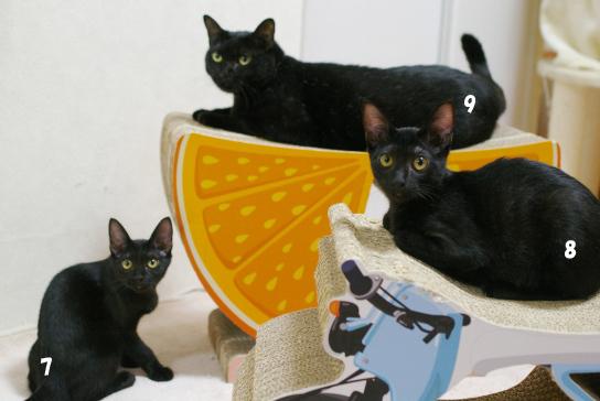 黒猫勢ぞろい32342コピー