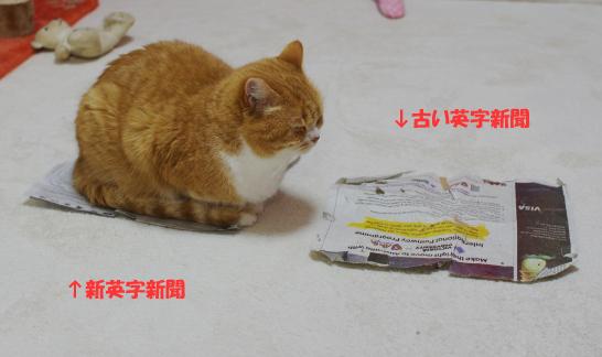 ぷぷぷ~同じ大きさだとわからない!!!のコピー