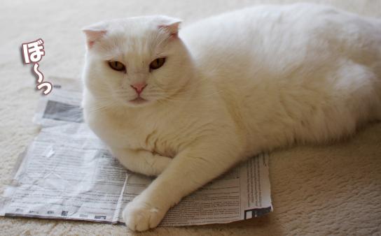 ぼーーっと新しい新聞で¥2343242のコピー