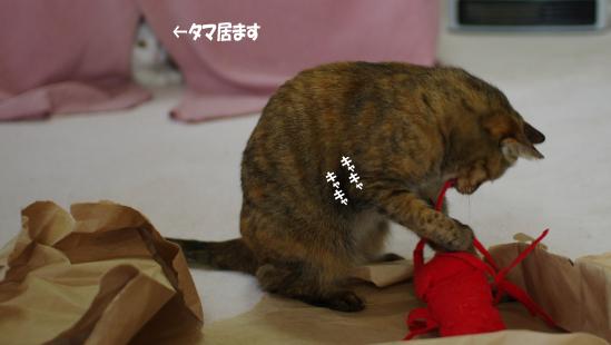 usirotamaimasu030333のコピー