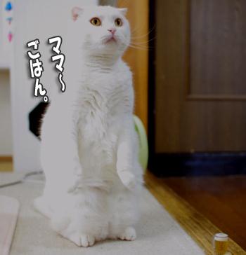 ママご飯ー――ー0タッチppコピー