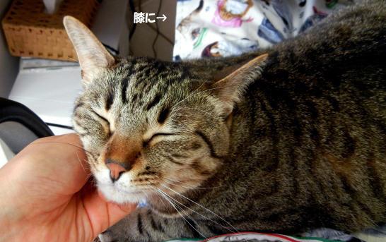 hizakakenimo6u4k4のコピー