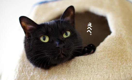 sonoatohairukedo4353453のコピー