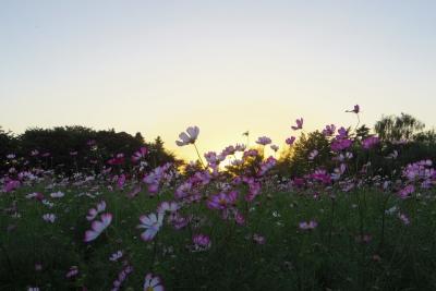 2014-09-28-sunset.jpg