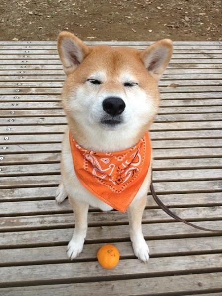 orange-lover