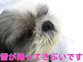 moblog_4d414eb8.jpg