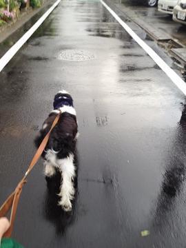 雨は止んでも地面は濡れてる
