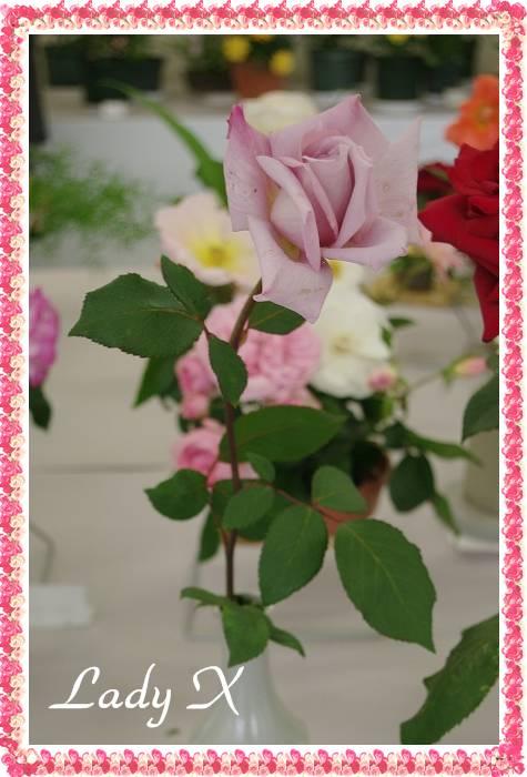 rose519 020