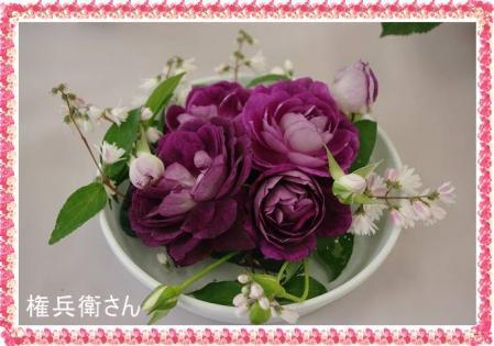 rose519 025
