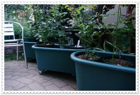 planter 037