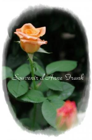 rose721 050