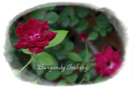 rose721 055
