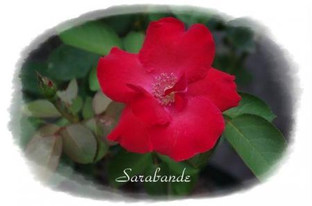 rose721 070