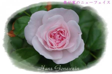 rose721 074