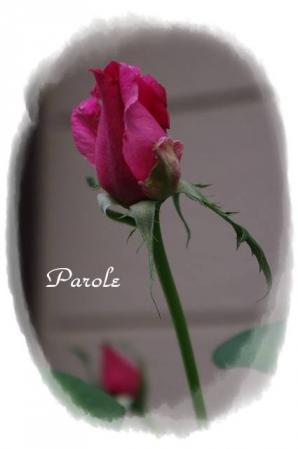 rose721 092