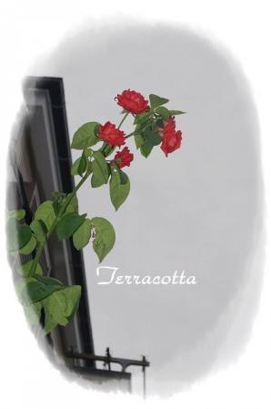 rose721 066