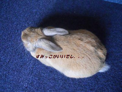 008_20111005131732.jpg