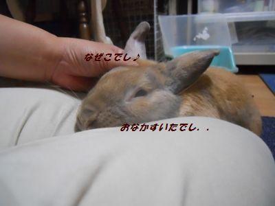 011_20110926155408.jpg