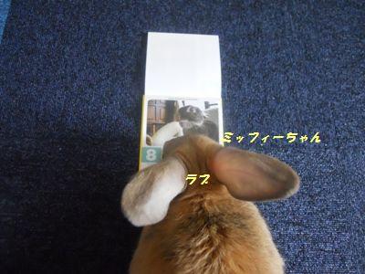 037_20111002132135.jpg