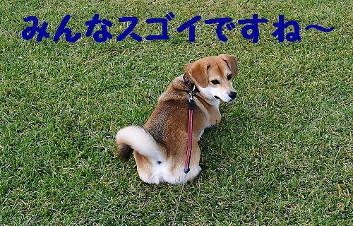 13_20111017231301.jpg