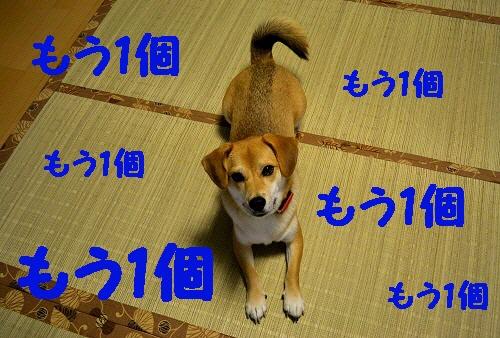 4_20111021212212.jpg
