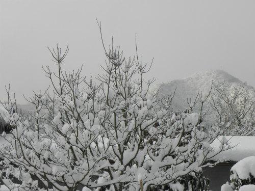 早朝の雪景色