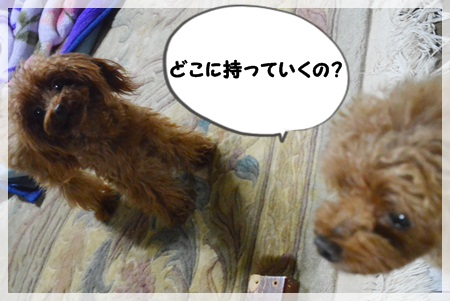 DSC_6612.jpg