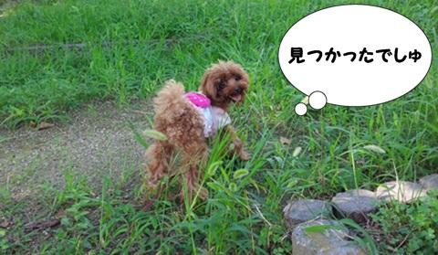 IMG_20140914_105529-crop.jpg