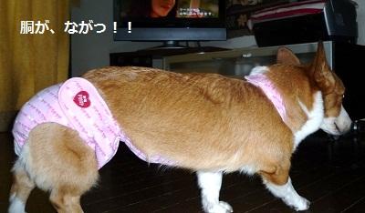 2011_0911_152852-P1110293.jpg