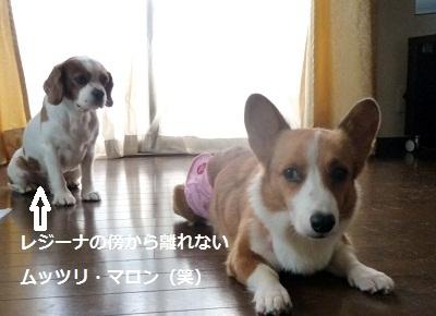 2011_0911_155132-P1110296.jpg