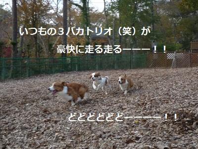 2011_1025_152504-P1120088.jpg