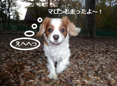 2011_1025_160916-P1110751.jpg