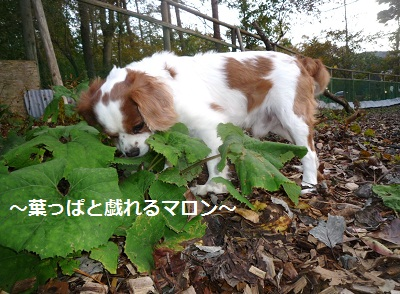 2011_1025_160959-P1110752.jpg