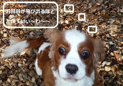 2011_1026_154123-P1110907.jpg