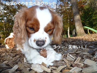 2011_1026_154351-P1110916.jpg