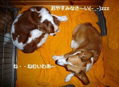 2011_1027_213620-P1120053.jpg