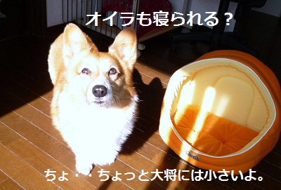 2011_1117_102208-P1120419.jpg