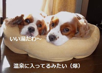 2011_1117_104100-P1120448.jpg