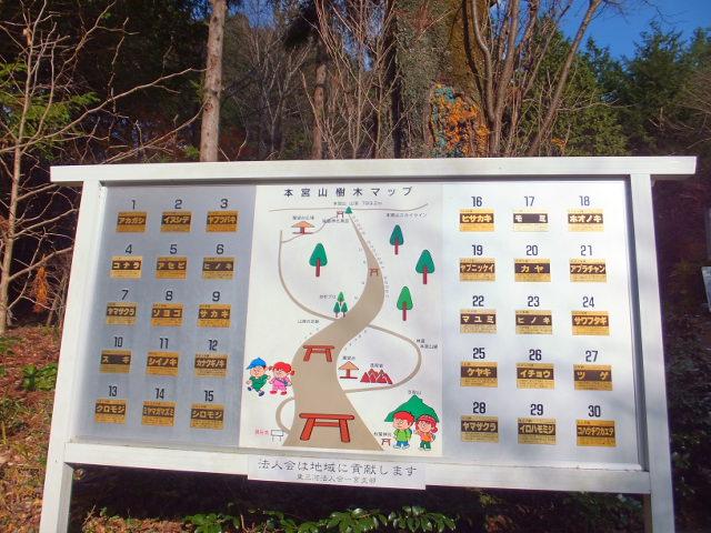 本宮山で見られる樹木