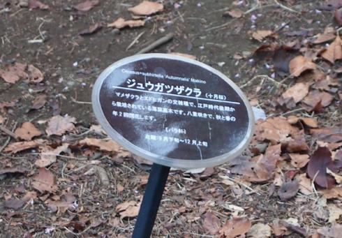 新宿御苑2013-7