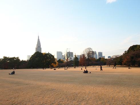 新宿御苑2013-11