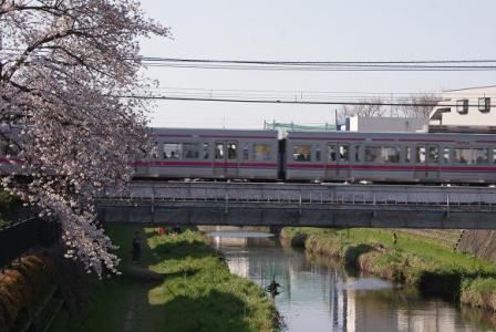 京王線と桜①