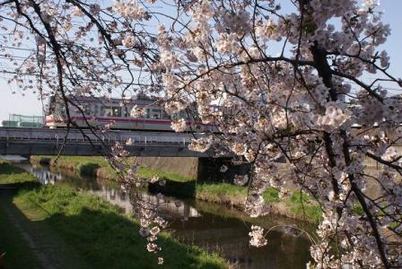 京王線と桜②