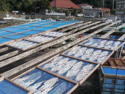 08021019イカが干される港