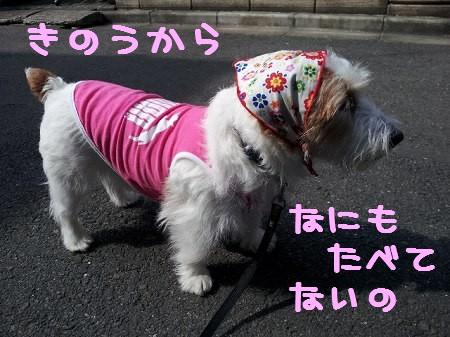 2013-04-0105.jpg