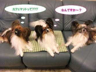 04-01_20111004084315.jpg
