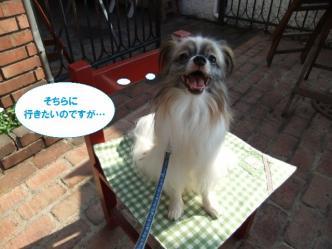 12-16_20111012150700.jpg