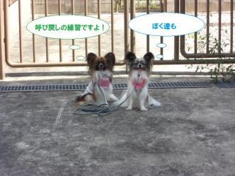 25-11_20110926150303.jpg